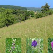 Die Landwirte, Gärtner und Lohnunternehmer der MR Grün- und Winterservice GmbH pflegen für Regierungspräsidien und Landschaftserhaltungsverbände Landschaftsschutzgebiete und Naturschutzgebiete. Damit tragen sie auch dazu bei, unsere vielfältige Kulturlandschaft zu erhalten.